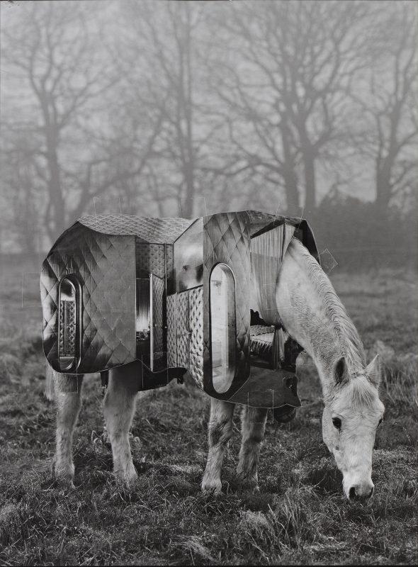 Horse of Oblivion 3, 2019