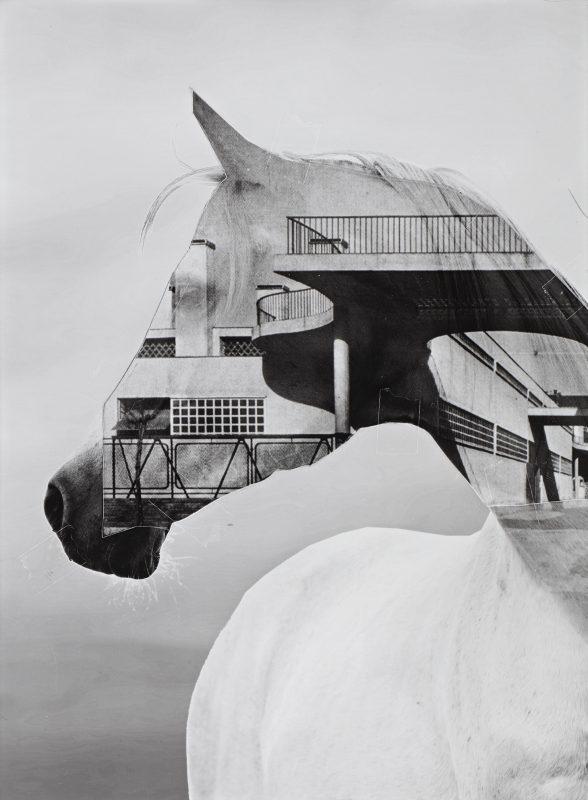 Horse of Oblivion 6, 2019