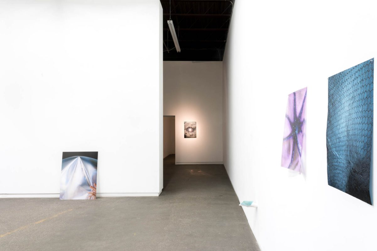Installation view of Steven Beckly at Daniel Faria Gallery, 2018